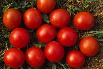 tomate-0001.JPG