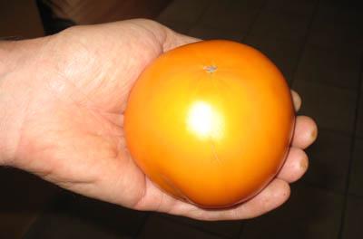 tomateorange.jpg