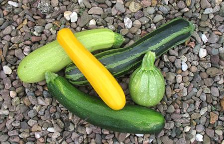 Les courgettes au jardin - Comment congeler les courgettes du jardin ...