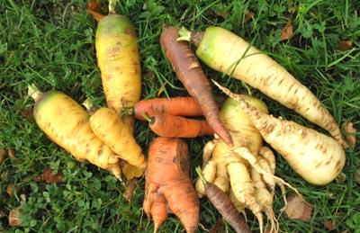 carottesjardin.jpg