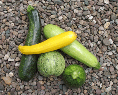 courgette2.png