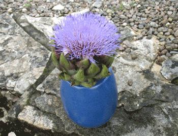 fleurartichaut.png