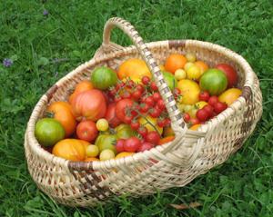 tomates4.jpg