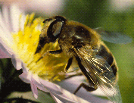 abeille-0002.png