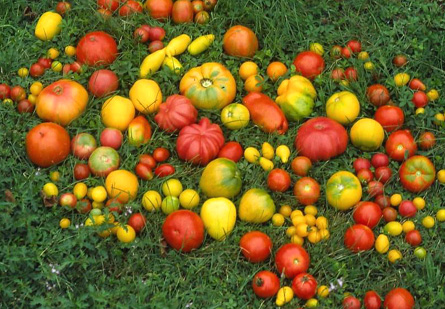 tomates1.jpg