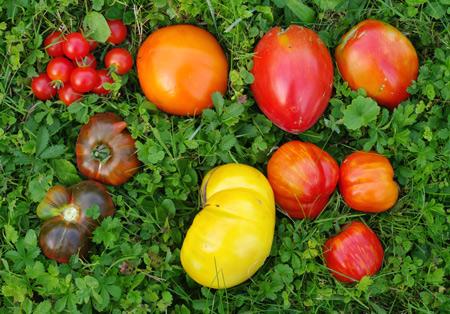 Parlons de la tomate le blog de katman - Quand repiquer les tomates en pleine terre ...