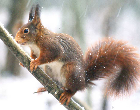 ecureuil-14