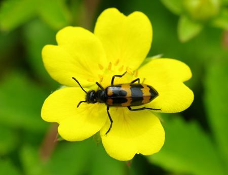 insecte11