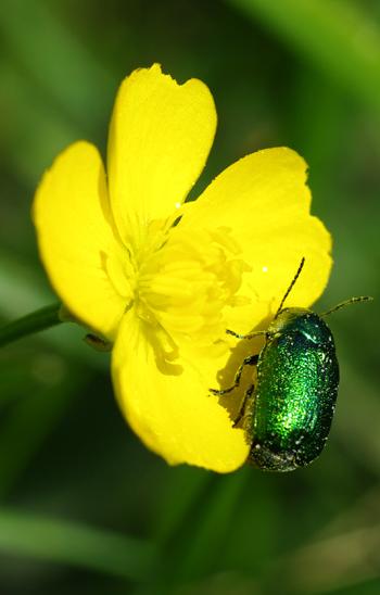 insecte31