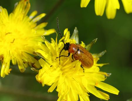 insecte41