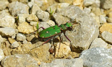 insecte42