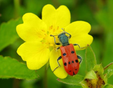insecte5
