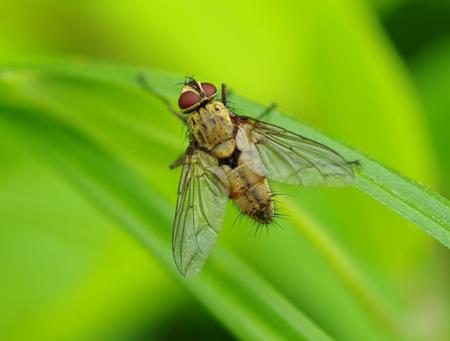 insecte51