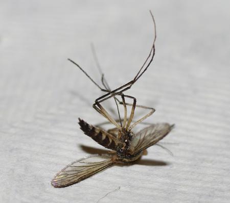 insecte6