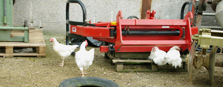 poules31