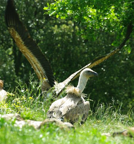 vautours41