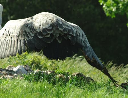 vautours9