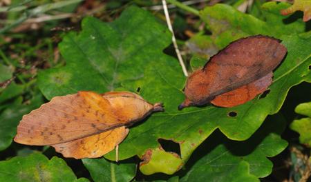 deux-feuilles-mortes