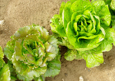 salades2