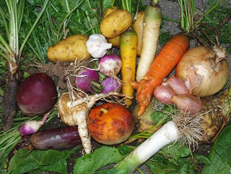 legumesracines
