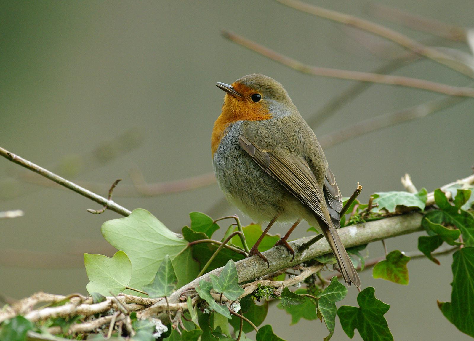 Toutes les autres espèces présentes sont également des classiques du début  d hiver   sittelle 9516b4e96b4